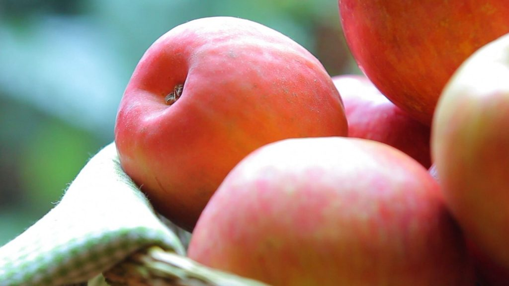 chicken apple puree15